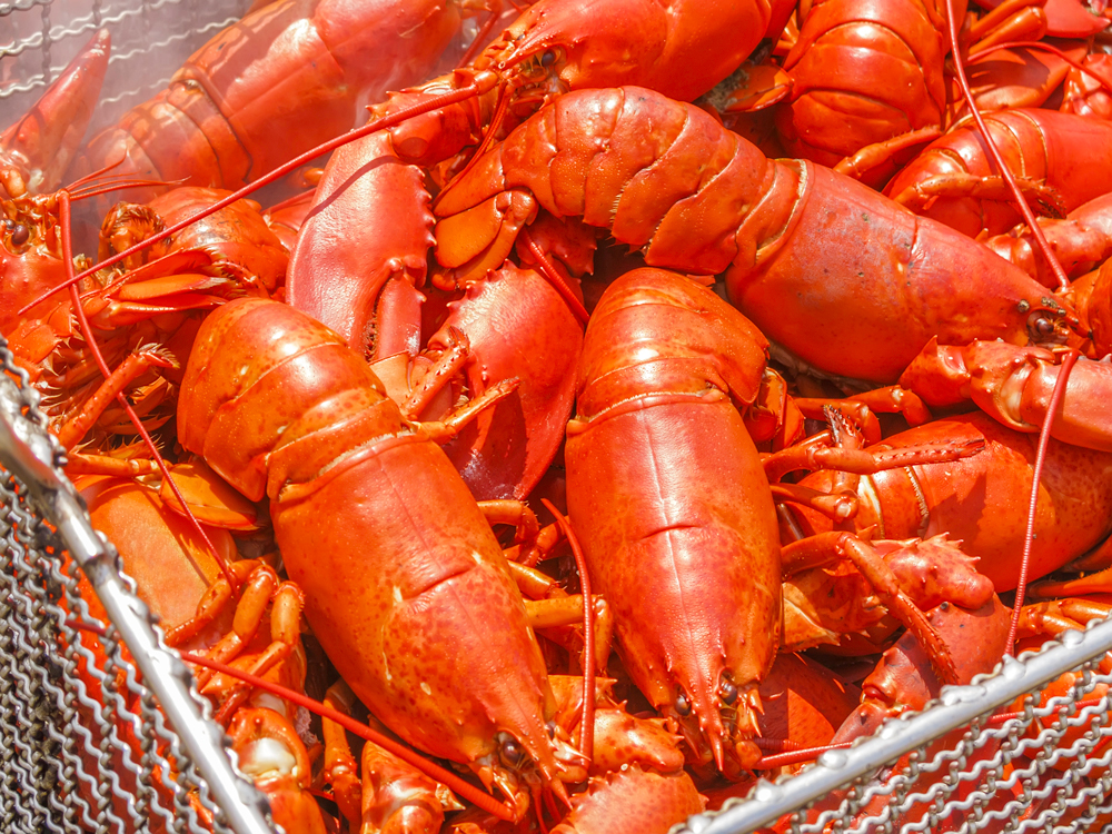 Maine's Lobster Bake